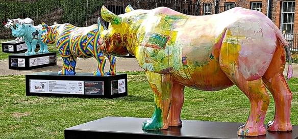 rhino 1
